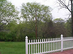 Nice fenced in back yard with large deck
